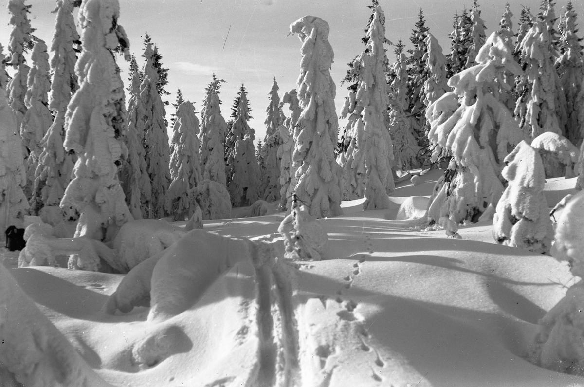 Skispor i vinterlandskap.